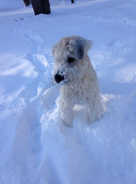 P in snow 1